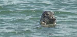Maine Lobster Harvesting & Seal Watching Tours