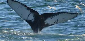 Captain John Whale Watching & Fishing Tours