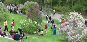 The Arnold Arboretum of Harvard University