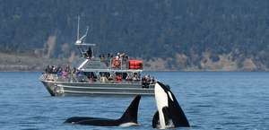 Ocean EcoVentures Whale Watching