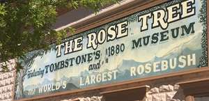 Rose Tree Muesum