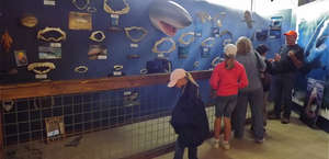 Whale, Sea Life and Sharks Museum