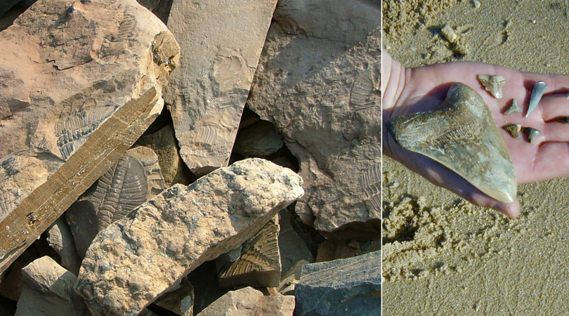 The best spots for fossil hunting in America | Roadtrippers