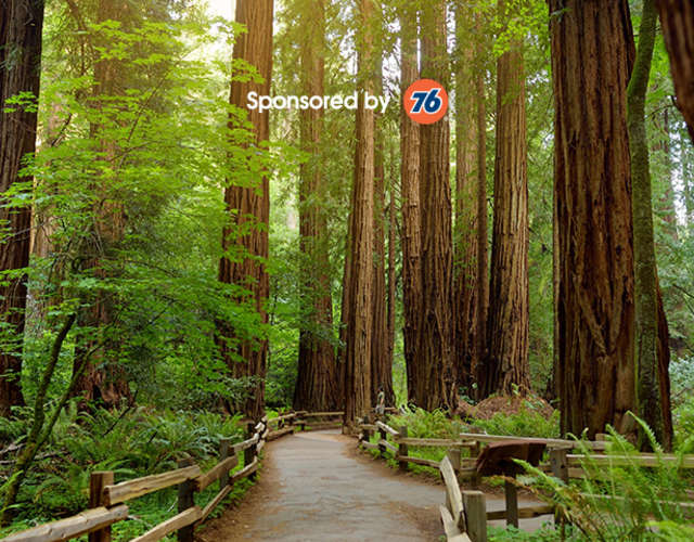 The Ultimate Coastal Redwoods Road Trip Roadtrippers