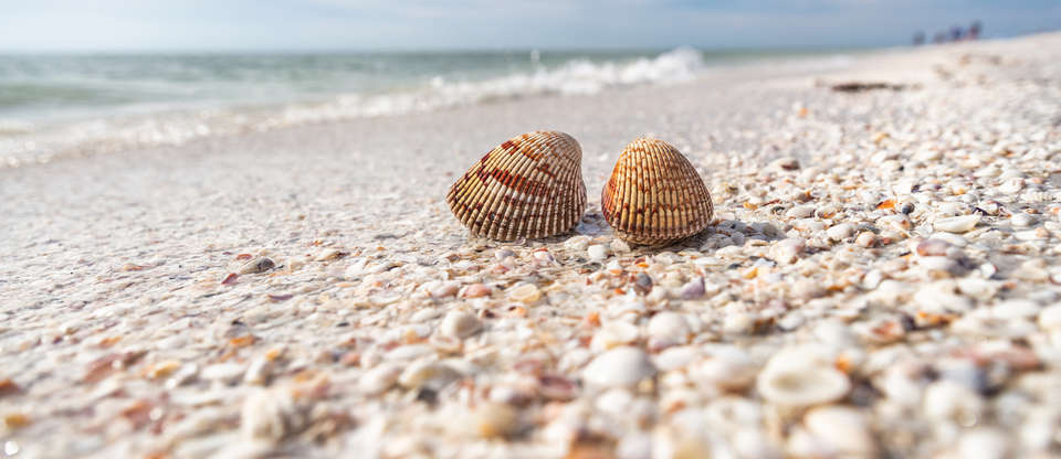 There's a Florida island where the beach is made of shells